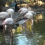 Bird Valley Park Zoo Playground Agadir Morocco